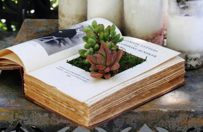 Aprenda a fazer uma bela decoração para sua casa usando plantas suculentas e livros antigos