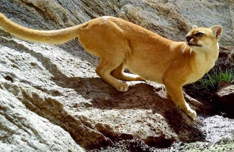 Seca que traz vida! Iniciativa monitora por imagens o dia a dia de animais da Caatinga