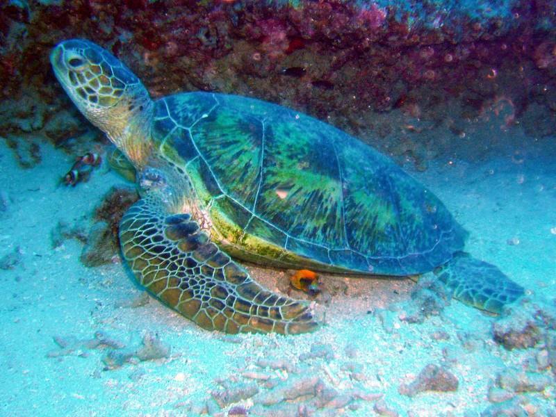 Mil tartarugas morrem todos os anos no litoral norte de SP por causa de lixo descartado indevidamente nas praias