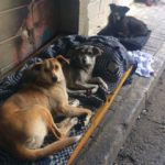 Grupo de jovens de SP se une para resgatar animais de rua e encaminhá-los para adoção responsável