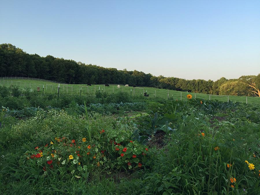 A fazenda em Nova York que doa 100% dos alimentos orgânicos que produz àqueles que têm fome