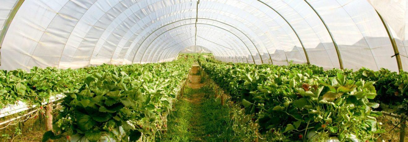 Egito vai ganhar cidade de US$ 10 bilhões 100% projetada para a agricultura sustentável