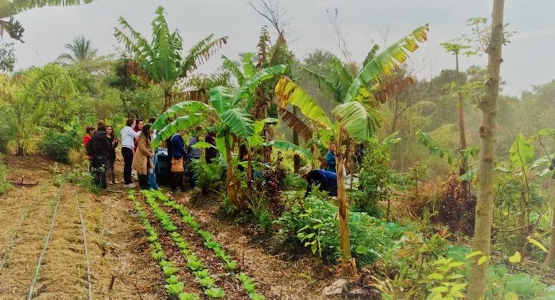 Buscando ser referência no tema, cidade de SP institui por lei Semana da Agricultura Orgânica