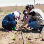 Escolas da Síria adotam hortas para garantir segurança alimentar em tempos de guerra