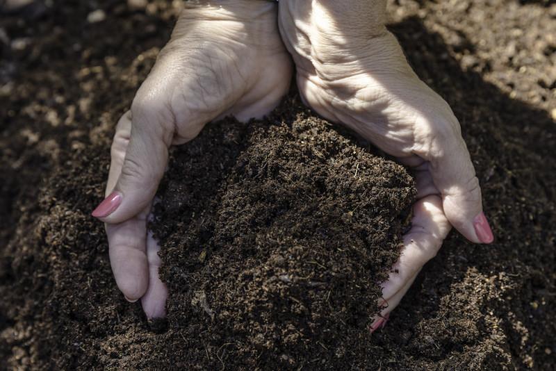 Não são só as minhocas! Piolhos de cobra também são excelente alternativa para compostagem de lixo orgânico