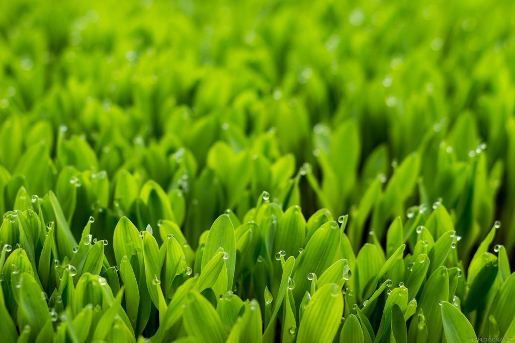 Sensor registra concentração de água em plantas e permite regular seu equilíbrio natural