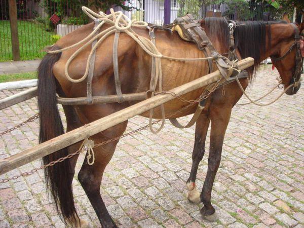 Câmara de Osasco quer proibir carroças puxadas por animais