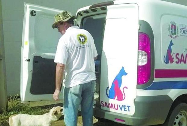 Precisa de atendimento médico veterinário para emergências? Conheça o Samu Animal