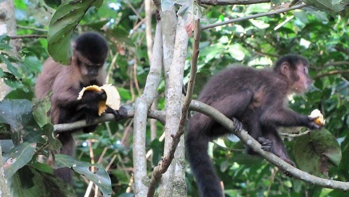 Febre amarela mata todos os macacos do Horto Florestal de São Paulo