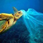 Chile é primeiro país da América Latina a proibir uso de sacolas plásticas