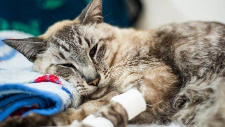 Mais um! SP ganha hospital veterinário público na Zona Oeste para atender bichinhos carentes
