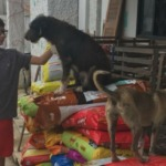 Menino de 12 anos pede ração de presente de aniversário para doar a animais que precisam