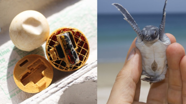 Ativistas imprimem em 3D ovos falsos de tartaruga (com GPS) para rastrear criminosos que os roubam