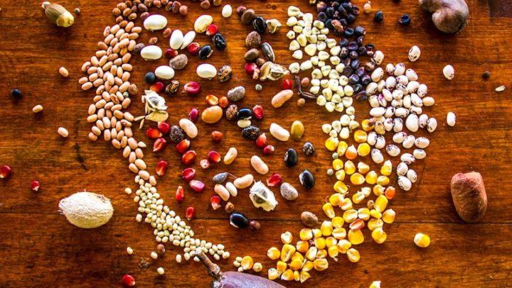 Curso de Agrofloresta ensina a plantar alimentos sem desmatar e agrotóxicos