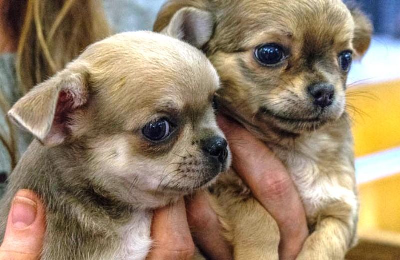Chega de comercializar vidas! Facebook proíbe venda de animais em suas páginas