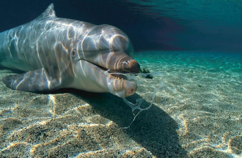 Está tudo errado! Fotógrafos da National Geographic clicam animais convivendo com plástico em seus habitats naturais