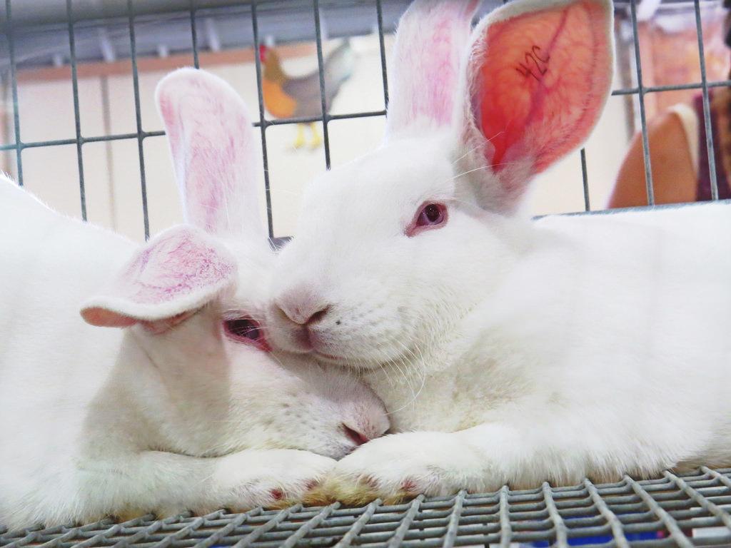Governador não queria, mas deputados se unem e testes em animais estão proibidos em MG