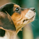 Chega de fabricar filhotes! Austrália proíbe reprodução comercial de cães e gatos