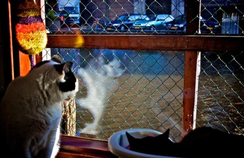 Gatinhos que não têm dono são acolhidos em barco em Amsterdã enquanto esperam por adoção