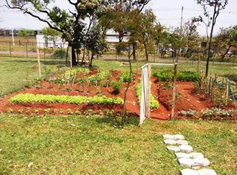 Terminal de ônibus cria horta comunitária para funcionários plantarem orgânicos para consumo