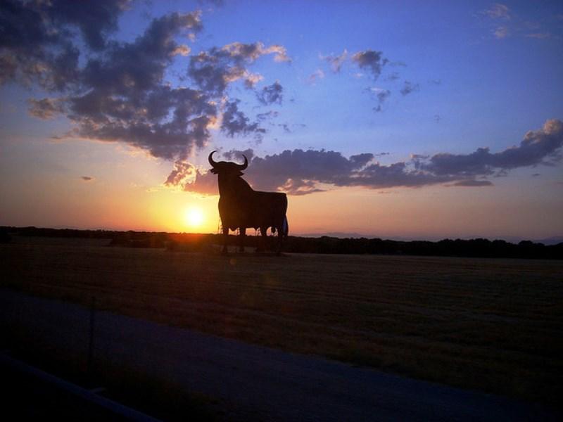 Sem maus tratos! Espanha troca touros por bolas em corrida tradicional