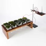 Conheça a técnica que produz energia elétrica a partir de plantas