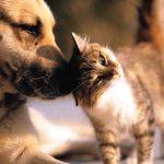 Miami estuda proibir venda de cães e gatos