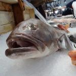 Aquecimento causa redução no tamanho dos peixes