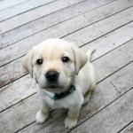 MG propõe desconto no IR para gasto com saúde animal