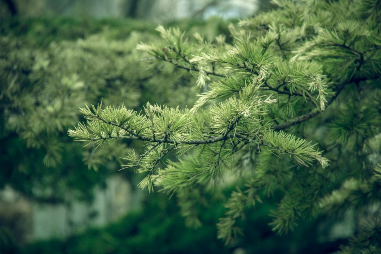 MIT descobre forma de despoluir água usando galhos de árvores