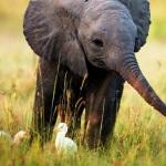 Os países que mais (e menos) protegem os animais
