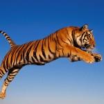 6 importantes causas animais que (ainda) precisamos defender no século 21