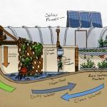 Aprenda a cultivar alimentos dentro da piscina (vazia)