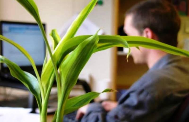 5 aromas que ajudam a melhorar a produtividade no trabalho