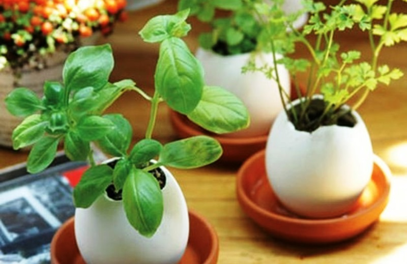 Aprenda a plantar na casca do ovo