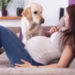 Conviver com animais na gravidez faz bem aos bebês, garante estudo