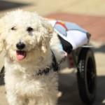 O brasileiro que faz próteses (de graça) para cães e gatos que não podem andar