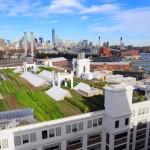A maior horta urbana já construída no topo de um prédio