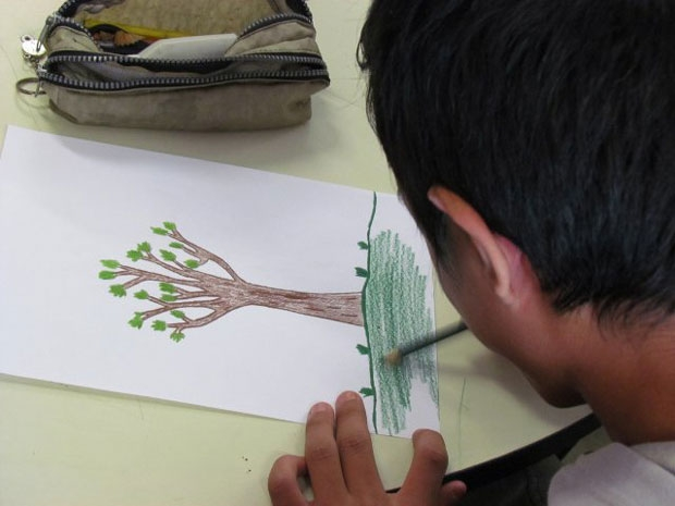 ONG oferece acervo de sementes para cidadãos que apoiarem crowdfunding