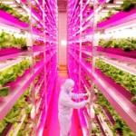 Japão usa luz LED para cultivar verduras 2,5 vezes mais rápido