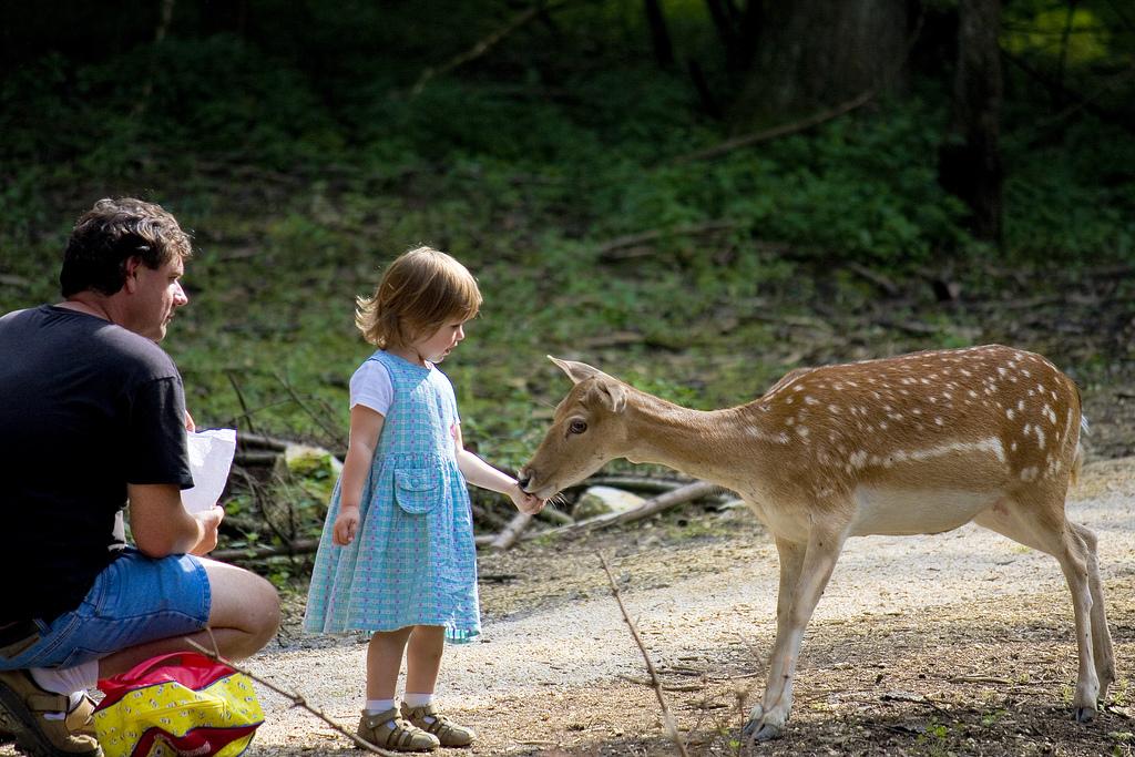 5 dicas para ser um pai sustentável