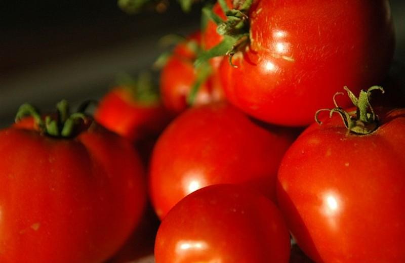 Irlanda do Norte proíbe cultivo de alimentos transgênicos