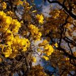 Que tal virar árvore quando morrer? Cemitério oferece biournas que viram plantinhas