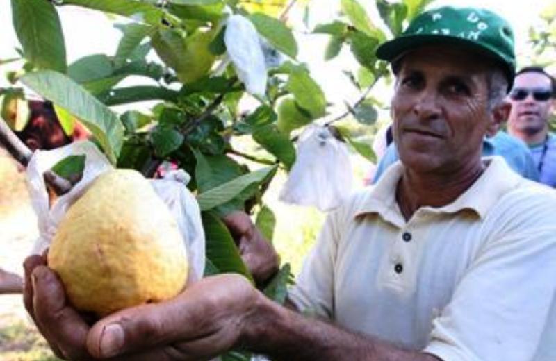 O agricultor que montou sozinho uma agroindústria para produção de sucos de fruta orgânicos