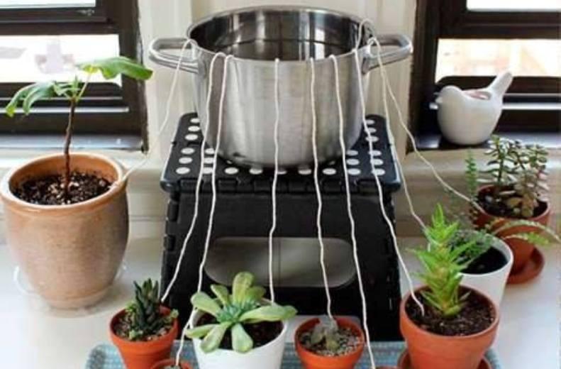 Aprenda como regar suas plantas quando for viajar