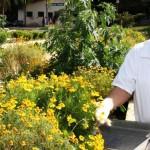 Cidade de MG produz e distribui remédios naturais de graça para população