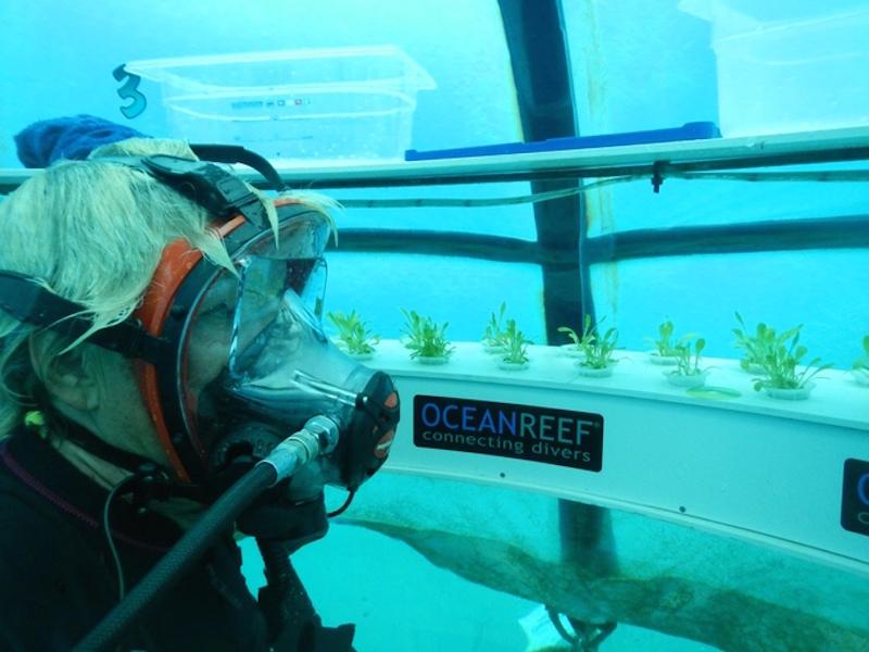 Conheça a fazenda orgânica que fica no fundo do mar