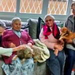 Em SC, asilo adota cães velhinhos para fazerem companhia aos idosos
