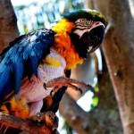 Revista online GRATUITA reúne informações para amantes das aves. Acesse!