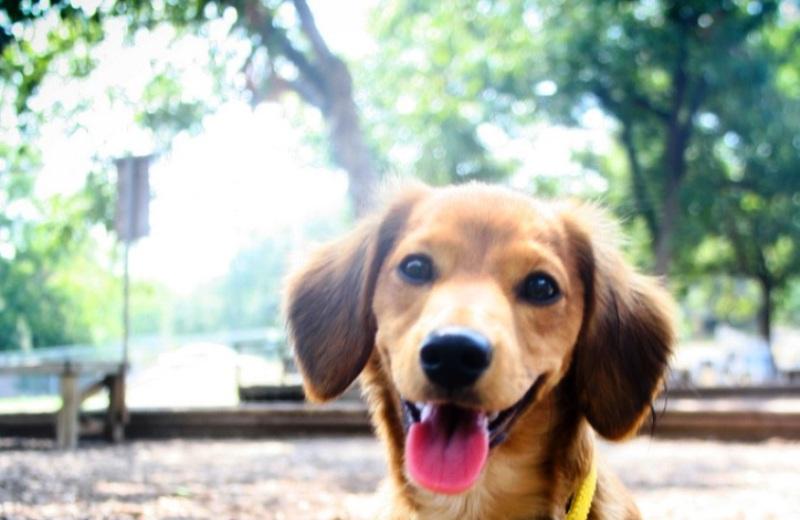 Empresa convida a cremar animais de estimação e transformá-los em árvores para eternizá-los